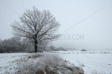 Alt Bork  Deutschland  Winterlandschaft mit schneebedeckten Baeumen und Feldern