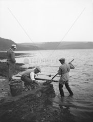 Oyster fishers watched by a tourist  Percuil  Cornwall  1937.