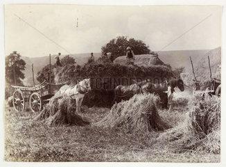 Harvest  c 1890.