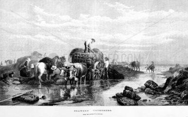'Seaweed Gathering'  1874.