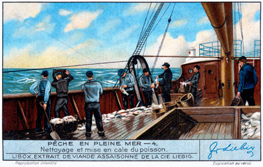 Cleaning fish before stowing in the hold  French Liebig trade card  early 20th century.