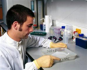Molecular geneticist washing 'Southern blots'.