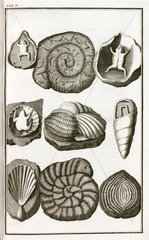 Fake fossil shells and frogs  1745.