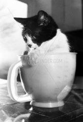 Cat in a measuring jug  March 1989.