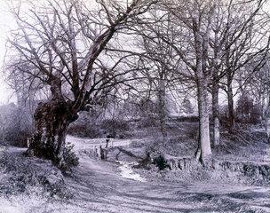 Woodland scene  with boy on a small bridge