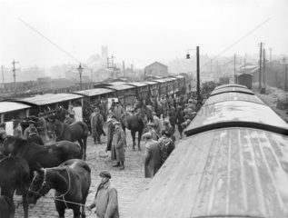 Horses at Ormskirk  1914.