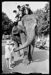 An elephant ride at the zoo  6 June 1933.