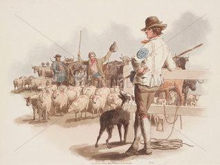 'Smithfield Drover'  1808.