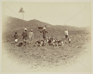 Men with hounds before a hunt  Ceylon  c 1870.