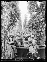 Hop picking  31 August 1937.