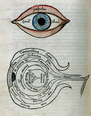 Structure of the eye  1535.