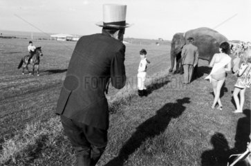 Top-hatted man and elephant at the races  c 1967.