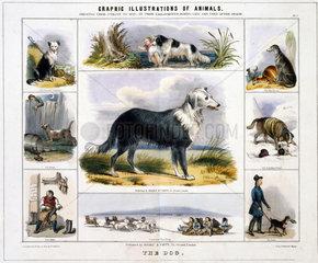'The Dog'  c 1845.