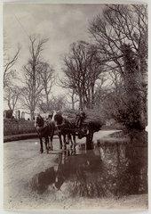 Horses pulling a cart  c 1890.