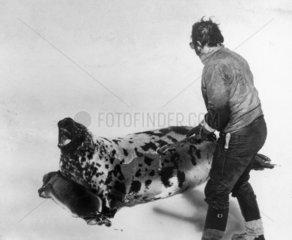 Seal-clubbing  March 1980.