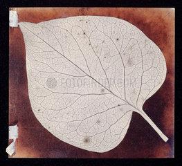 'A leaf'  c 1840.