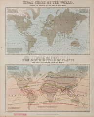 A tidal chart and a map of the distribution of plants across the world  c 1850.