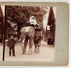 'Elephant Jumbo at the Zoo'  c 1895.