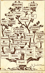 Alcohol tree  c 1900.