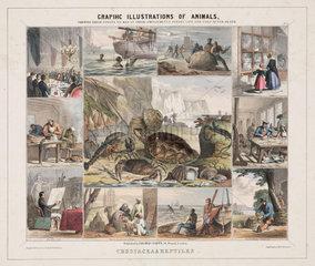 'Crustacea & Reptiles'  c 1845.