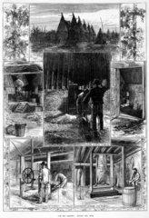 'The Hop Harvest'  c 1870s.