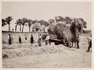 Hay gathering  c 1890.