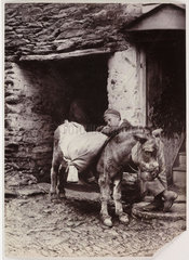 Young boy and an old donkey  c 1890.