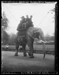 'Elephant At Zoological Gardens'  27 September 1898.