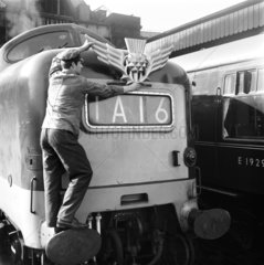 Worker attaching thistle emblem to Deltic locomotive  9 March 1964.
