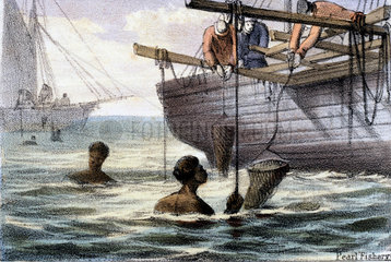 'Pearl Fishery'  1845.