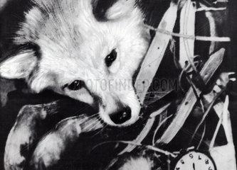 Laika  dog sent into space  4 November 1957.