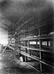 Indigo drying house  Allahabad  India  1877.