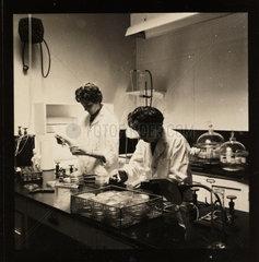 Manufacturing Penbritin  1961.