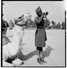 Egpytian soldier  1940