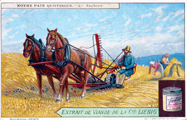 Harvesting the wheat  Liebig trade card  early 20th century.