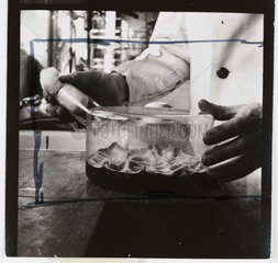 Penicillin culture flask  1943