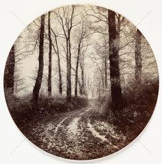 Path through trees  c 1890s