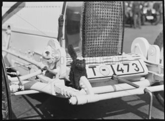 Black cat mascot on a Bugatti racing car  Germany  1932.