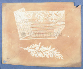 Folded lace and botanical specimen  1839.
