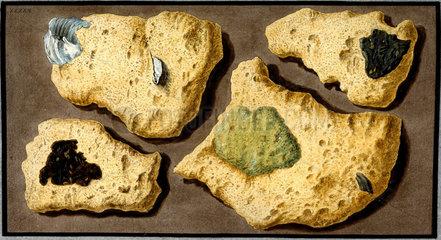 Specimens of tufa  c 1770.