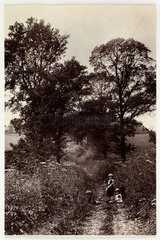 Children in a country lane  c 1890.