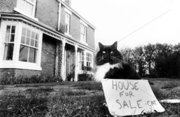 'House for Sale + Cat'  February 1989.