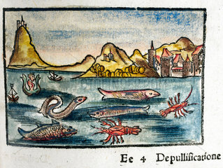 Creatures of the sea  1535.