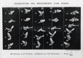 'Le vol des oiseaux'   1890.