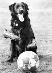 Dog with football  1988.
