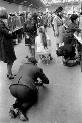 Dog show  United Kingdom  1967.