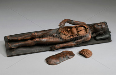 Male anatomical figure  possibly 17th century.