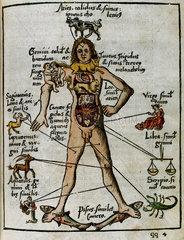 Zodiacal man  1535.