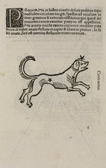 The constellation of Canis minor  1488.