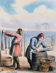 'Cod Curing'  c 1845.
